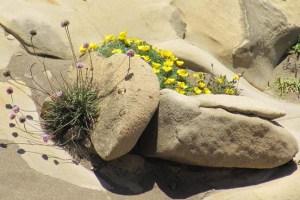 Salt Point bouquet