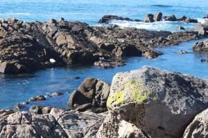 Salt Point Seals