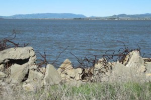 Bay Trail Napa rebar sculpture