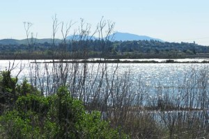 Bay Trail Napa River backwater
