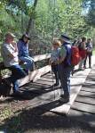 Bridge at Sonoma Creek