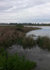 Calm Napa River