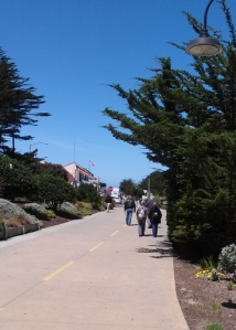 Trail to Pacific Grove