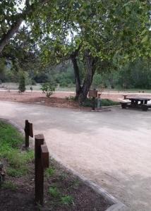 Garland picnic near Visitor Ctr
