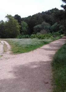 Garland trail split