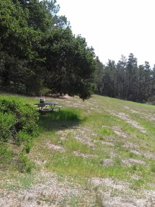 Jacks Peak picnic meadow