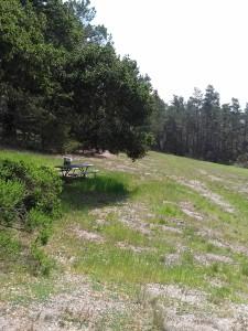 Jacks Peak picnic meadow
