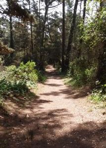 Jacks Peak Trail Return