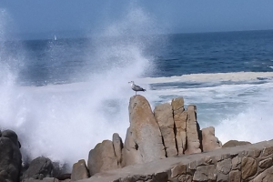Lovers Point waves