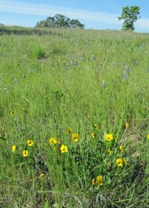 Reservoir Hill Meadow
