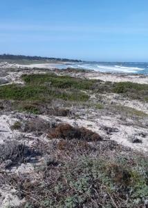 Asilomar ocean view