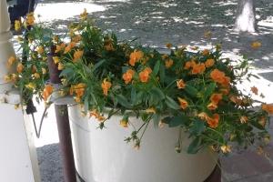 Preston farmstore flowers