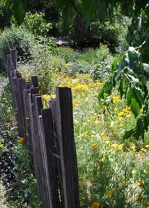 Preston flower garden