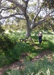 Oak Memorials