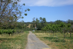 Preston vineyard orchard