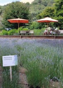 Matanzas lavender umbrellas