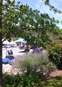 Coppola pool garden