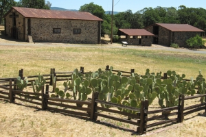 London Ranch Buildings Cactus