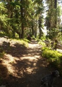 Waldo Lake shoreline trail