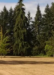 Perkins Peninsula trees