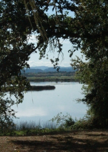 Fern Ridge view east Peninsula Perkins