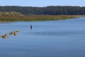 Siltcoos marshy lake