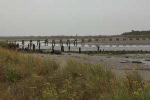 Eureka mudflat m Oregon 171
