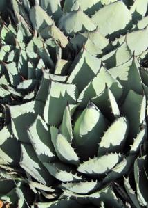 10-14 botan more cacti m