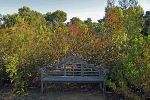 Arboretum bench