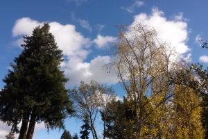 11-14 beautiful sky