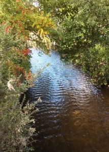 laguna de Santa Rosa creek
