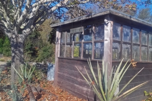 arbor shed