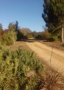 arbor trail