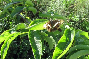 butterfly 2 m