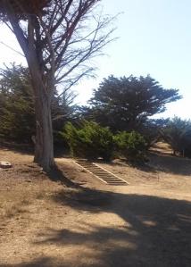 Mori Pt stairs