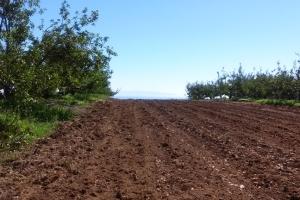 UCSanta Cruz Farm