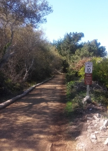 Pt Mori trail