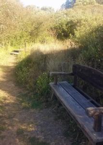Waddell bench