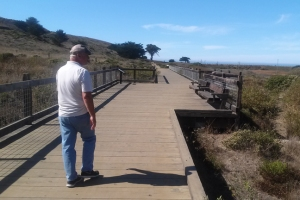 Wetland Boardwalk Pt Mori
