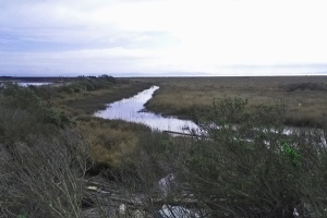 bay wetland