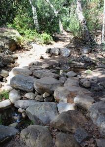 Botanic creek