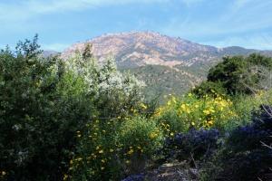Botanic mountains