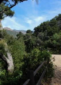 Botanic path