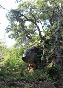 Botanic rock trees