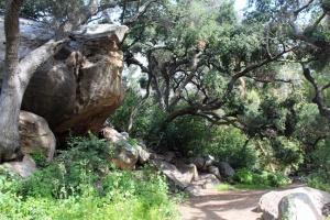 Botanic woods and rock