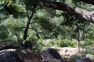 Botanic woods