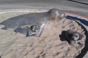Cole with seals in Carpenteria