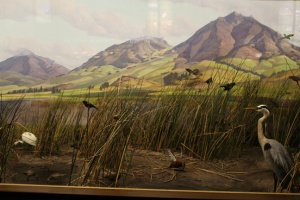 History heron marsh