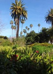 Keck palms
