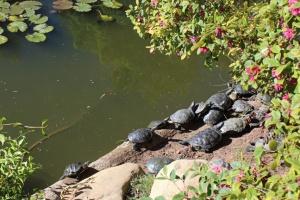 Keck turtle heaven